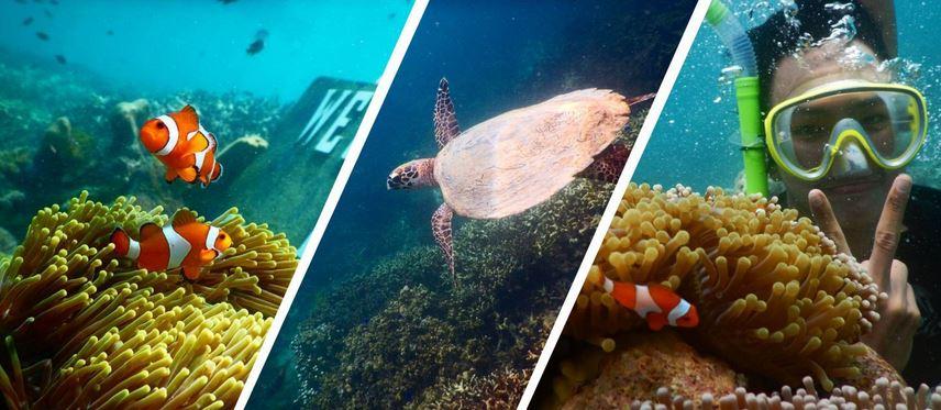 Menjelajah Pulau Pahawang, Menyaksikan Ikan Nemo Di Habitat Aslinya